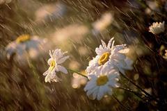 雨天露营怎么办? 提前准备享受雨的浪漫